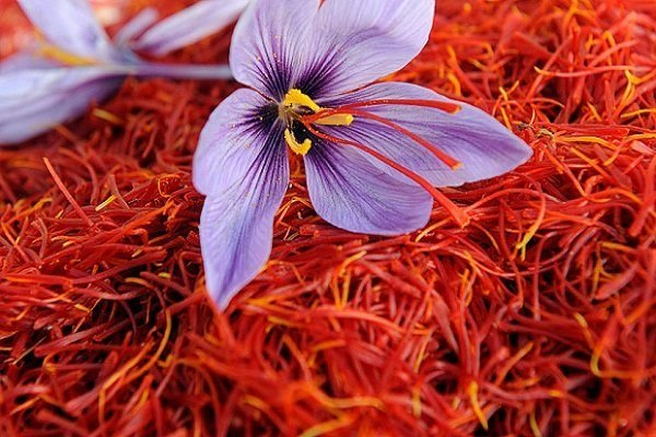 33% rise in saffron exports in five-month period